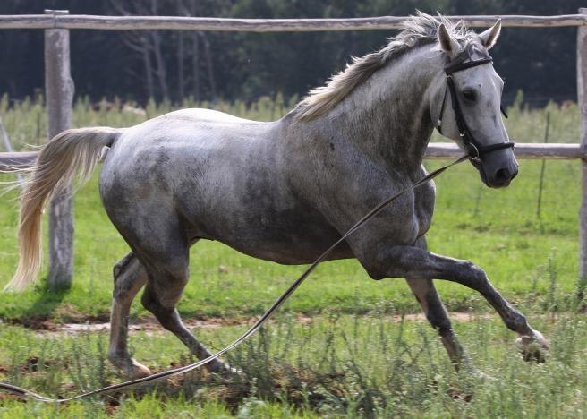 horse-1143322_1920